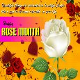 A Nice Rose Month Card For You...