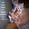 Home : Events : Smile Power Day 2018 [Jun 15] - Smile Power Day Kittens.