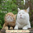 Cute Smile Of Cats!