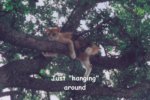 Relaxing Tree Cat.