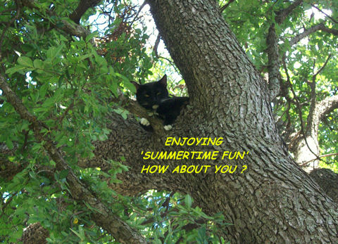 Summer Fun Cat In Tree.