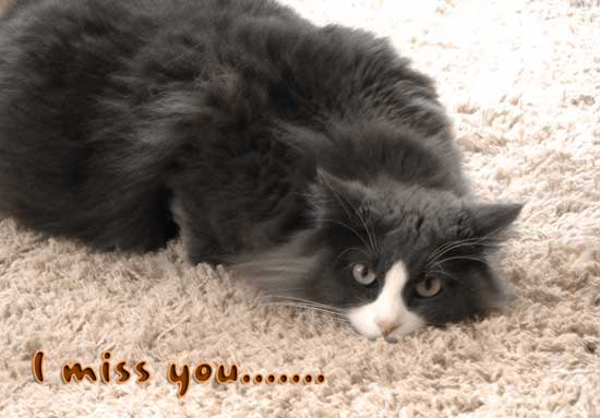 i miss you cat