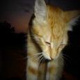 Kissekattis.