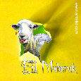 Eid Mubarak, From A Sheep.-eid al adha greeting