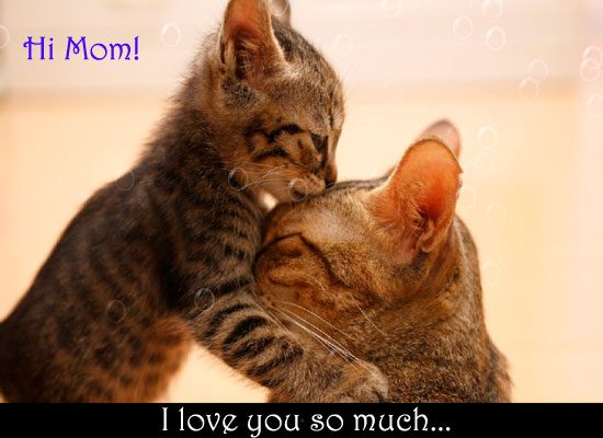 Cute Kitty Love Free Say Hi to Mom Day eCards, Greeting