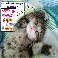 Kitty Wishes A Happy Nowruz!