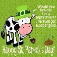 Tricky Cow!