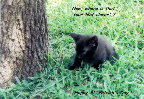 St. Patrick's Day Kitten.