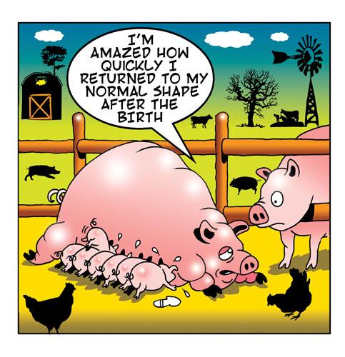 Piglets.