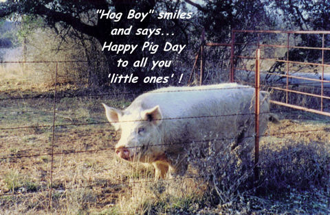 Hog Boy Says, Happy Pig Day!