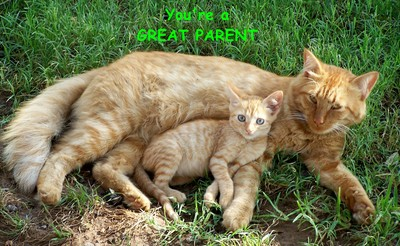 cat spring single parents Cat spring babysitters near me cat spring babysitter profiles include videos, qualifications & parent reviews browse by experience, pay rate, response time, background check, and more.