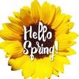Sunny Sunflower For Spring.