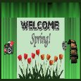 Welcome Spring With Tulips.