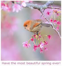 Best Spring.