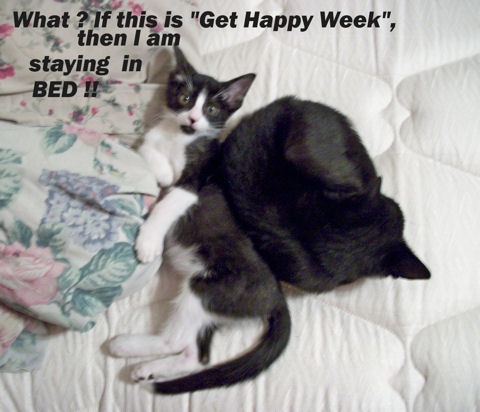 Get Happy Week Cats.