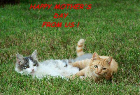 Happy Mothers Day Kittens.