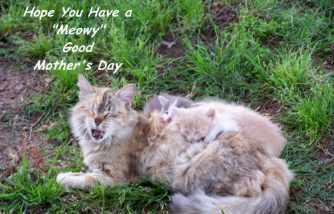 Smile For A Mom Cat.