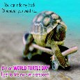 Turtle Rides A Skateboard.