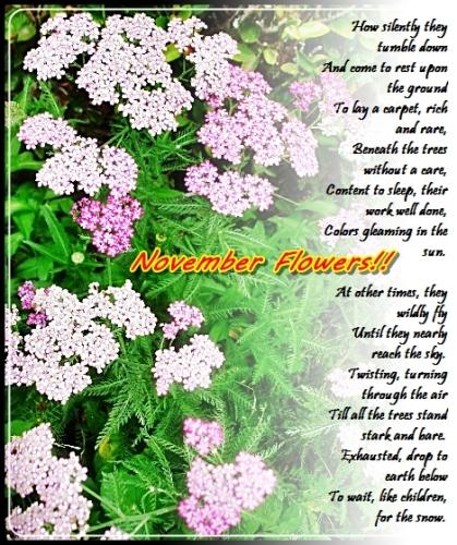 Flowers Of November.