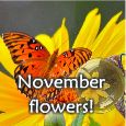Discover The Charm Of November!