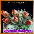 November Flowers Wishes...