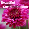 Beautiful Chrysanthemum Whisper You...