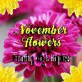 November Birth Flower.