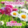 Colorful Day & Colorful November!