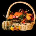 Thanksgiving Bounties...