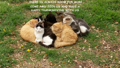 Thanksgiving Cats.