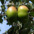 Life Is Abundant.