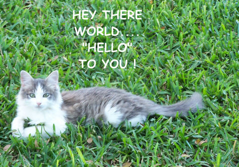 World Kitty.