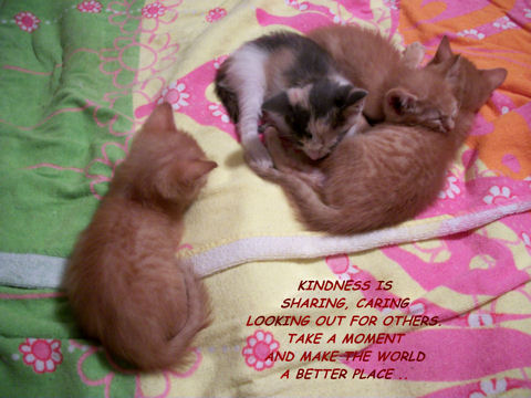 World Kindness Day Kittens!