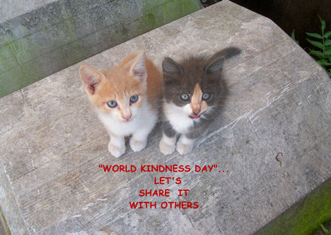 Kindness Day Kittens.