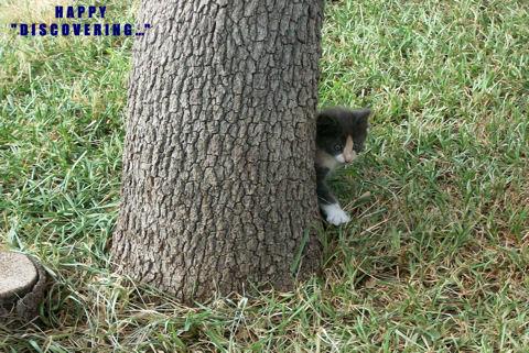 Discovering Kitten.