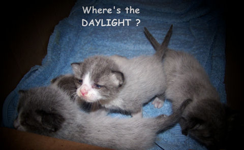 Where Is The Daylight Kittens?