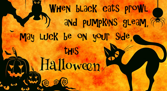 Black Cats And Pumpkins.