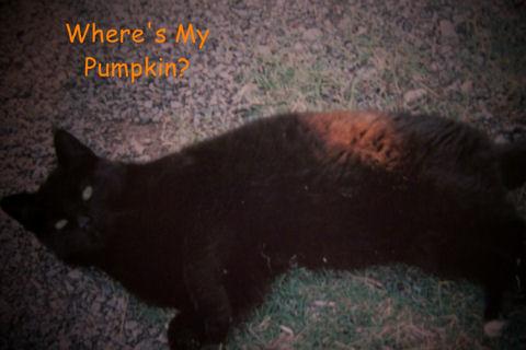 Halloween Kitty.