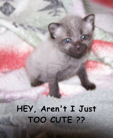 Hey, Cute Kitten Day.