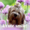 Sending A Cute Smile!