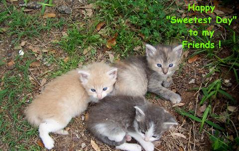 Sweetest Day, Friends Kittens.
