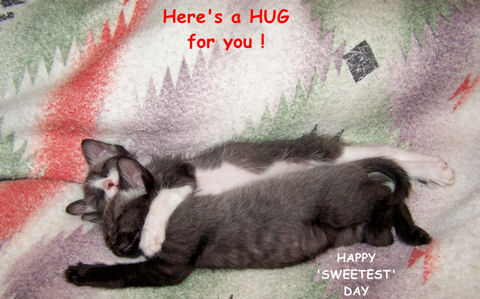 Sweetest Day Hug, Cats!