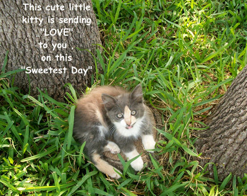 Sweetest Day Love Kitten.