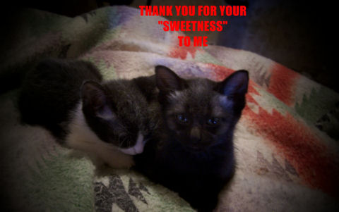 Thank You Sweetest Kittens.