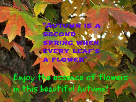 Autumn Flowers...