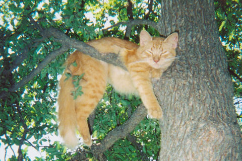 Cat Hanging In Tree.