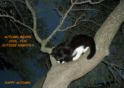 Autumn Night Cat.