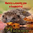 A Beautiful Autumn Ecard For You.
