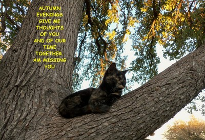 Missing You Autumn Cat.