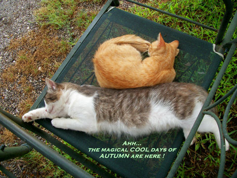 Magic Autumn Cats.